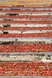 Amazing infinite arrangement surface of red dried tomatoes Royalty Free Stock Images