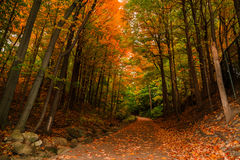 amazing inviting view of autumn woods, path in park Stock Photos