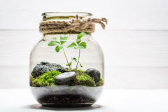 Amazing jar with piece of forest as new life concept. On white table stock photo