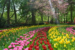 Amazing Keukenhof. Keukenhof botanical garden in the Netherlands. Picture taken in may 2013 royalty free stock photo