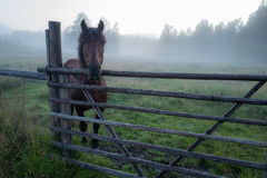 Amazing ladscape with horse in foggy paddock Stock Photography