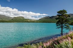 Amazing Lake view in Jotunheimen National Park with blue sky above and green tree on the right stock images
