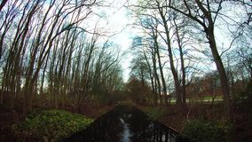 Amazing lake view with trees Amsterdam Osterpark December 2018. Netherlands stock footage