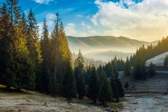 Amazing landscape in autumn mountains. Wonderful autumn morning with gorgeous sky above the spruce forest and fog in distant valley. amazing landscape in stock photos