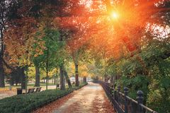 Amazing landscape of autumn season park. Glowing with some effect In morning at park. Wrocla royalty free stock photos