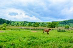 Beautiful horse on the background of Ukrainian Carpathian mountains royalty free stock photo