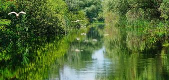 Amazing landscape with birds in the Danube Delta 2 royalty free stock images