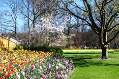 Amazing landscape with colorful flower beds and flower patterns in the park Keukenhof, Holland, Europe.  stock photography