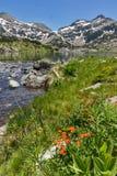 Amazing landscape of Demirkapiyski chuki and Dzhano peaks, Popovo lake and red flowers in front, Pirin Mountain Stock Image
