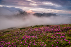 Amazing landscape with flowers Royalty Free Stock Images