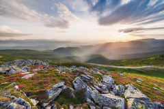 Amazing landscape with flowers Royalty Free Stock Image