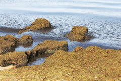 Amazing landscape formed by a seaweeds Stock Images