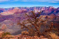 Amazing Landscape in Grand Canyon National Park,Arizona,USA Stock Images