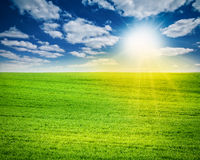 Amazing landscape with green field, sun and cloudy sky Stock Photography