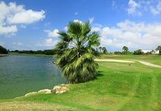 Amazing landscape with green palm tree near a lake on blue sky background.. Aruba. Beautiful backgrounds Stock Image