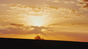 Amazing landscape with a lonely tree on the horizon. Beautiful sunset - land for agribusiness and fields. 4K video stock video footage