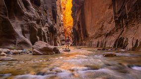 Free Amazing Landscape Of Canyon In Zion National Park, The Narrow Stock Photo - 165117800