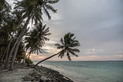 Amazing landscape of palms near of Indian ocean during the sunset Stock Photo