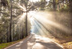 Sun rays on the road in forest. Amazing landscape with sun rays on the road in forest stock photos