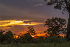 Amazing landscape of sunset and savannah in kruger Park, South Africa. Amazing landscape of red sunset and savannah in kruger Park, South Africa Royalty Free Stock Photo