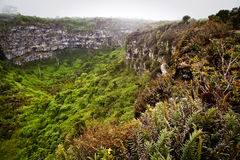 Amazing landscape of Twin Craters, Los Gemelos. Mysterious mossy forest in Santa Cruz island, Galapagos, Ecuador royalty free stock photos