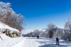 Amazing landscape in Vigla, Florina`s ski center, Greece Royalty Free Stock Photo