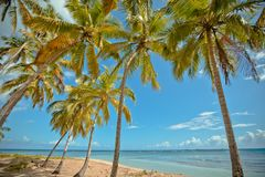 Palm trees over tropical lagoon with wild beach. Amazing landscape in the wil beach Playa Bonita, Las Terrenas, Dominican Republic Stock Image