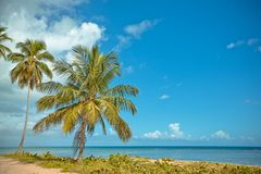 Palm trees over tropical lagoon with wild beach Stock Images