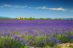 Amazing lavender fields in Provence region, Valensole, France, Europe Royalty Free Stock Photography