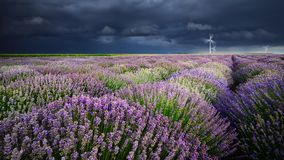 Amazing lavender fields in the summer time with storm clouds Royalty Free Stock Images