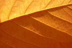 Amazing leaf texture Stock Photography