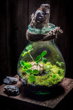 Amazing live plants in a jar with self ecosystem Stock Photos