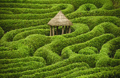 Amazing maze. A shot of a hedge maze with a hut in the centre Stock Photos