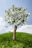 Amazing money tree on grass with falling leaves Royalty Free Stock Images