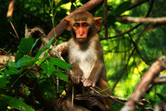 Amazing monkey Royalty Free Stock Photography