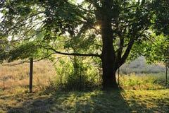 Amazing morning landscape. Royalty Free Stock Photos