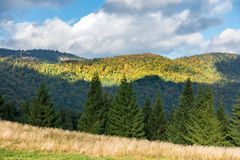 Amazing mountain forest in early autumn Stock Photo