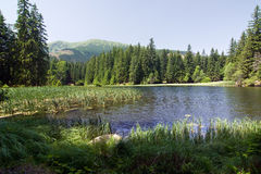 Amazing mountain lake in the summer Royalty Free Stock Image