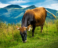 Amazing mountain landscape Royalty Free Stock Photography