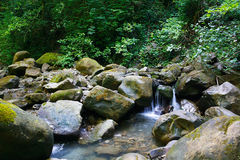 Amazing mountain stream among southern forests Royalty Free Stock Photos