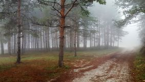 Mystical forest with fog. Amazing mystical forest with fog stock photos