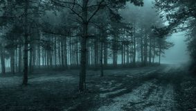 Mystical forest with fog. Amazing mystical forest with fog stock photo
