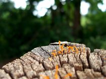 Amazing natural beauty. The beauty of the fungus stock images