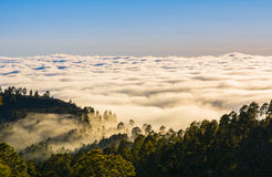 Amazing natural landscape of foggy mountains. Forest natural. Lo Royalty Free Stock Images