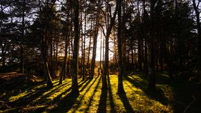 Tree forest low sun light creating shadow lines in the grass at Alvão, Portugal. Amazing natural light show in the woods royalty free stock photography