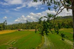 Amazing natural scenery with rice fields, mountains and blue skies. In Sigi district, central Sulawesi, Indonesia royalty free stock photo