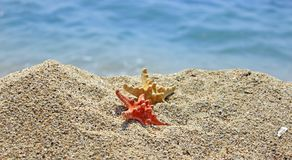 Summer creation on the beach with sea natural creatures. Amazing natural sea creatures at the sandy beach Royalty Free Stock Photo