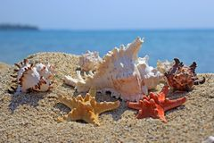 Summer creation on the beach with sea natural creatures. Amazing natural sea creatures at the sandy beach Stock Images