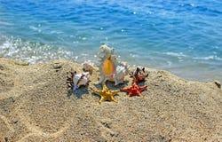Summer creation on the beach with sea natural creatures. Amazing natural sea creatures at the sandy beach Royalty Free Stock Photos