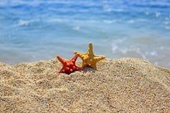 Summer creation on the beach with sea natural creatures. Amazing natural sea creatures at the sandy beach Stock Photos